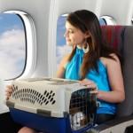 Какие правила перевозки домашних животных?